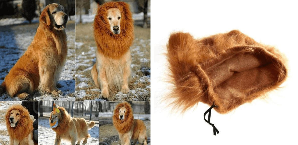 Lion Mane for Dogs Healthier Lifestyle 4 All S