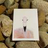 "claire jordan designs - 5"" x 7"" Flamingo Greeting Card"