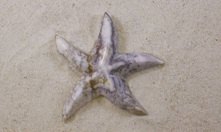 SS handcrafted Art - 5'' Marble Starfish