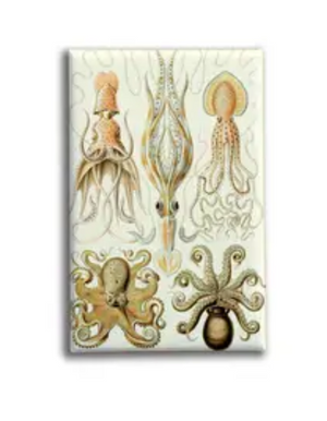 (Squid+Octopus) Sealife 2 Magnet - Oso + Bean