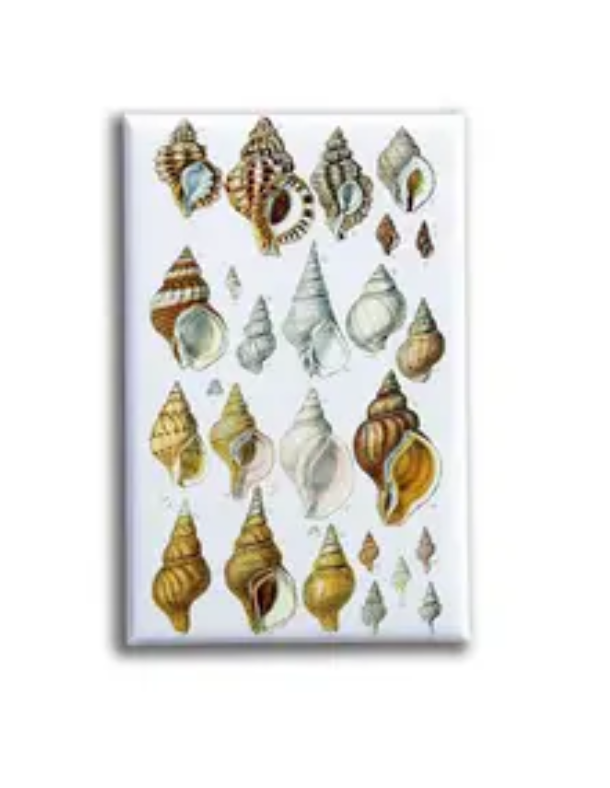(Conch) Shells 3 Magnet - Oso + Bean