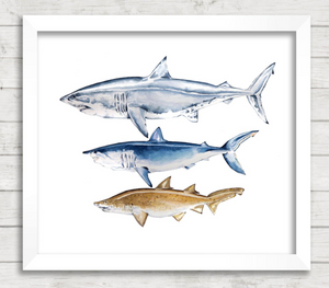 Shark Watercolor Painting - Violette Tide