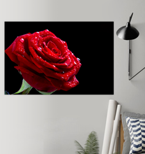 Load image into Gallery viewer, Bright Red Rose - Poster Art