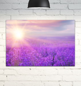 Lavender Field At Sunset - Wrapped Canvas Art