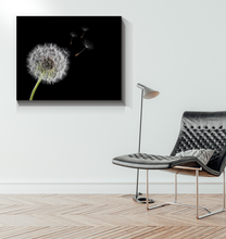 Load image into Gallery viewer, Dandelion - Wrapped Canvas Art