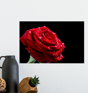 Bright Red Rose - Poster Art