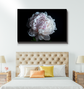 Pink Peony - Wrapped Canvas Art