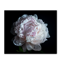 Load image into Gallery viewer, Pink Peony - Wrapped Canvas Art