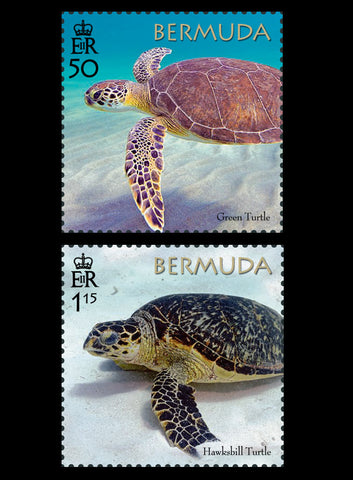 Bermuda Turtle Project 4 value set  22/3/18