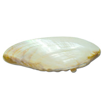 Footed Seashell Tray/Caviar Dish