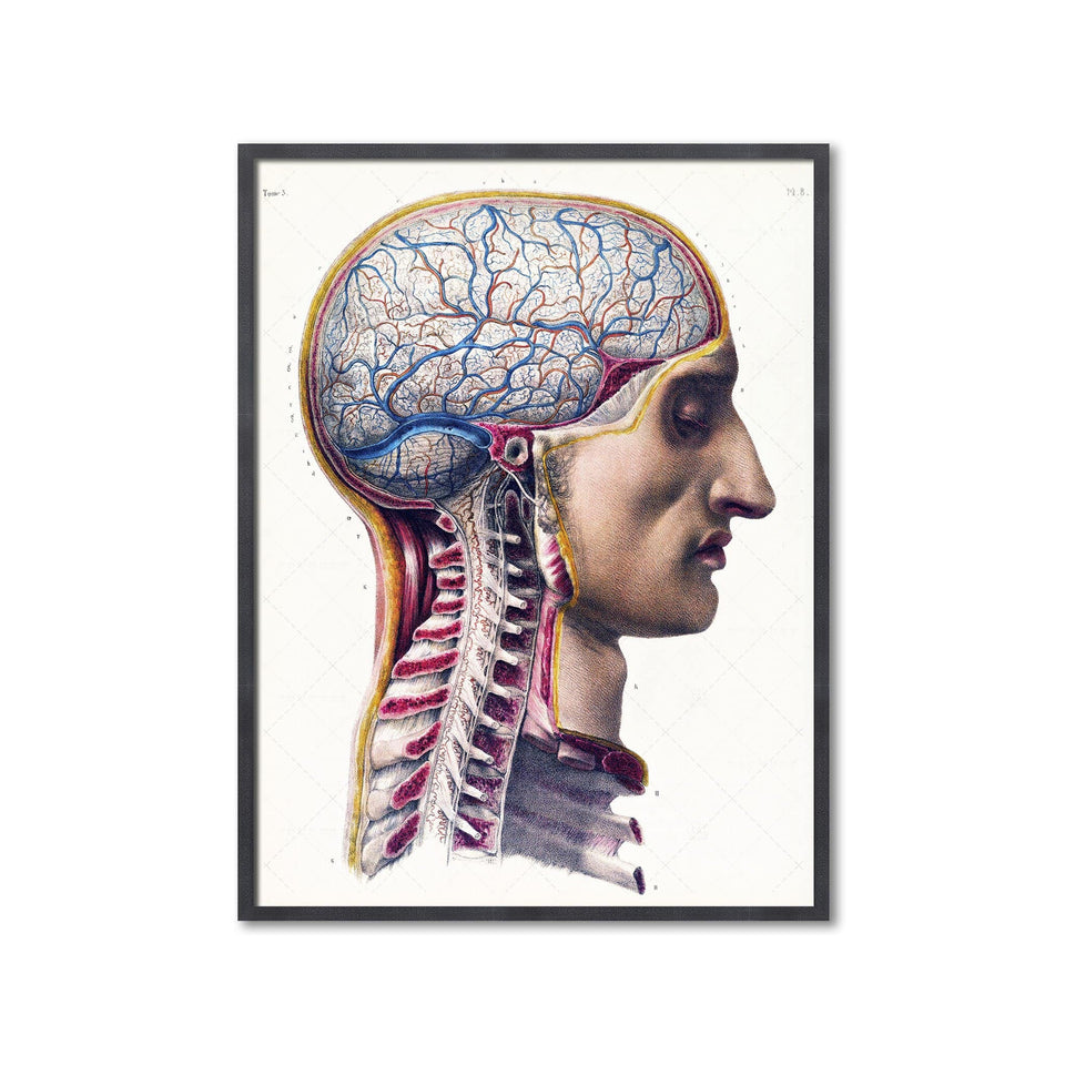 ATLAS of ANATOMY - HUMAN BRAIN and SPINE - Foundry