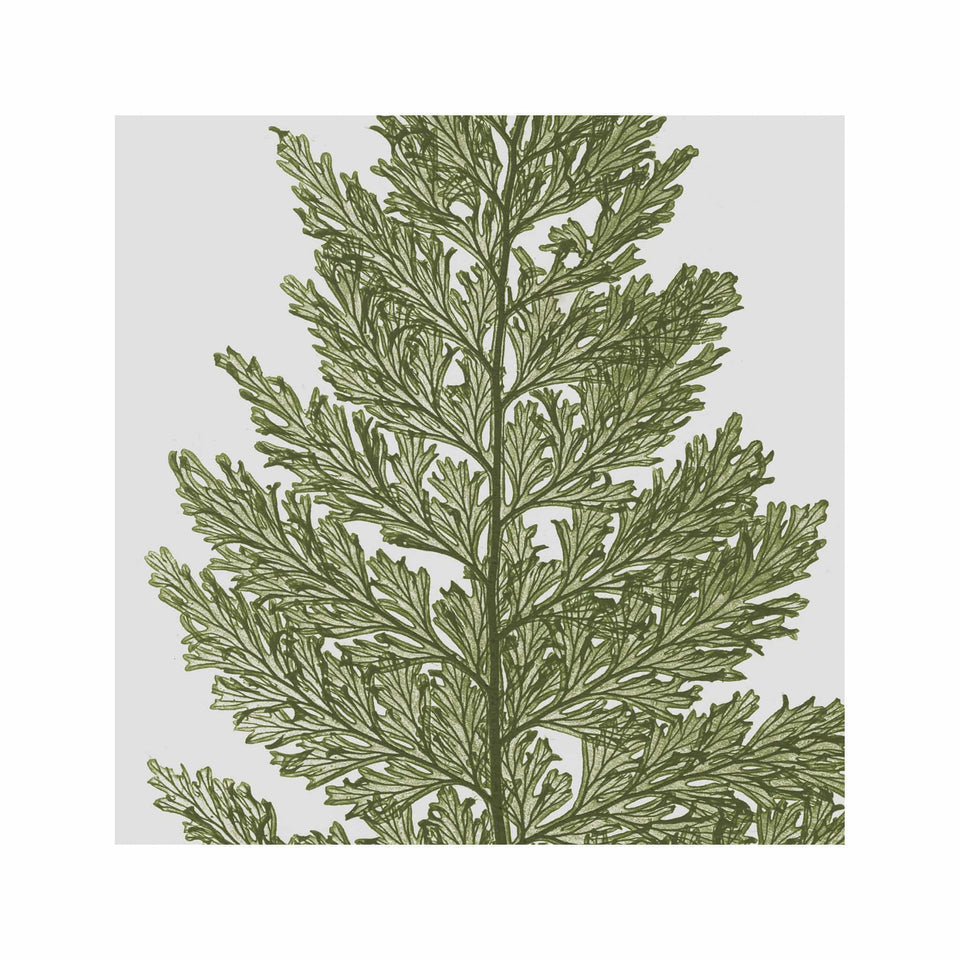 FERN ART: 1859 ENGLISH FERN #01 - Foundry