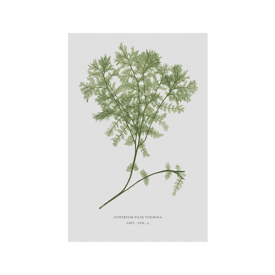 FERN ART: 1859 ENGLISH FERN #02