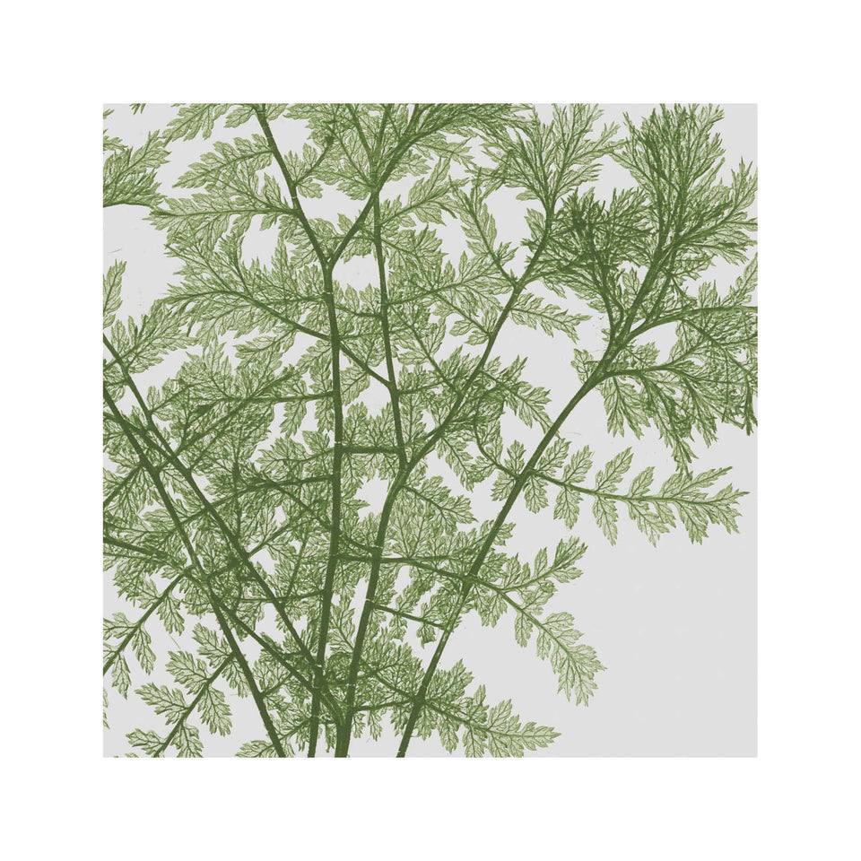 FERN ART: 1859 ENGLISH FERN #02 - Foundry