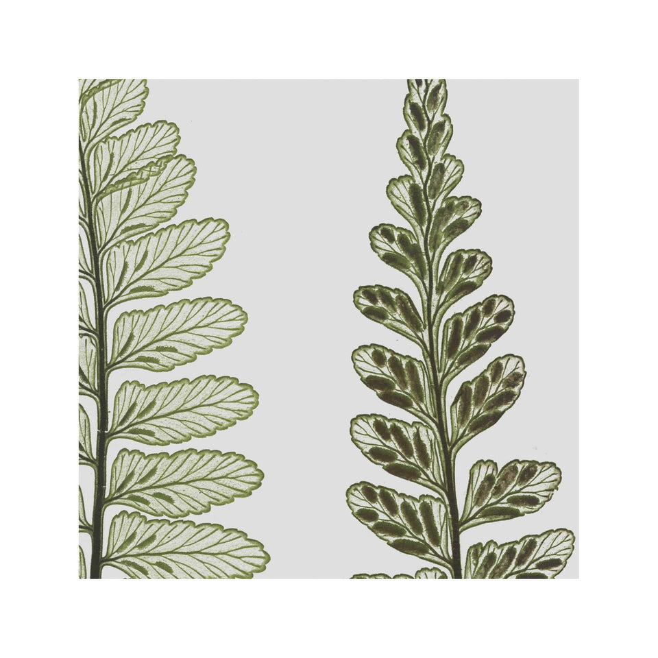 FERN ART: 1859 ENGLISH FERN #15 - Foundry