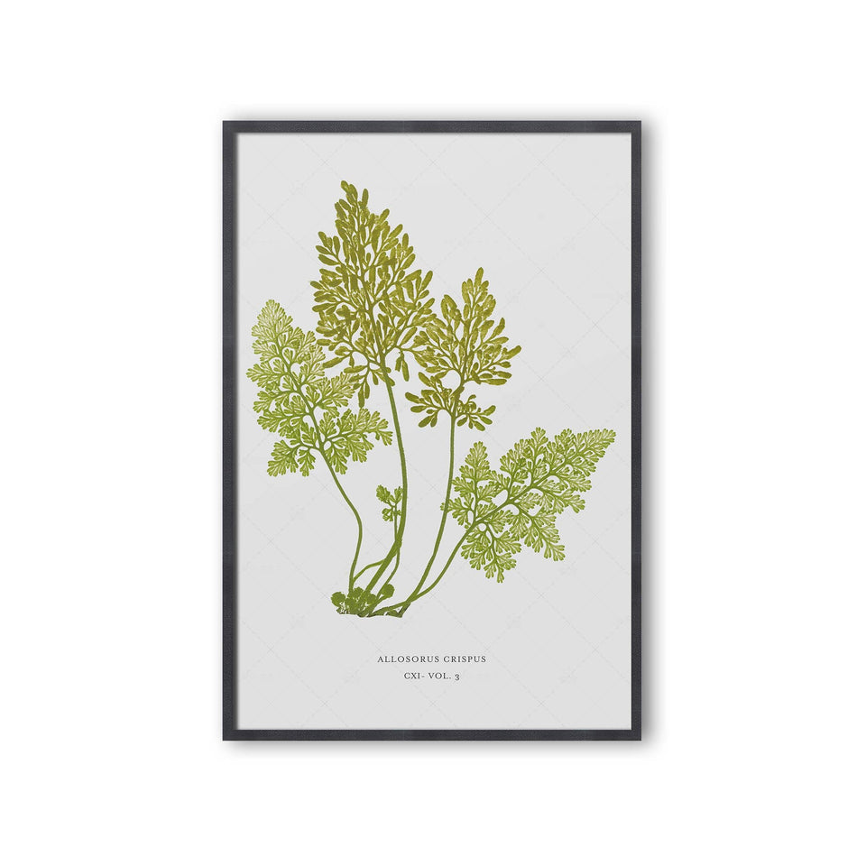 FERN ART: 1859 ENGLISH FERN #18 - Foundry