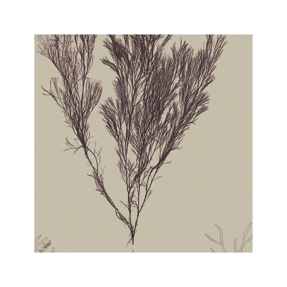 SEAWEED ART: 1859 BOTANICAL #07