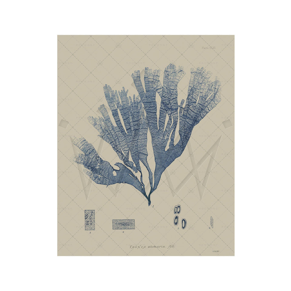 SEAWEED ART: 1859 BOTANICAL #19 - Foundry