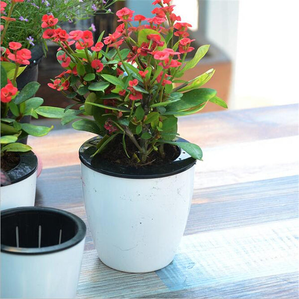 Magic Self Watering Flower Pot