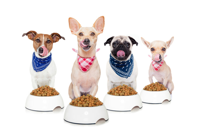 Our Favorite Brands of  Organic Dog Food