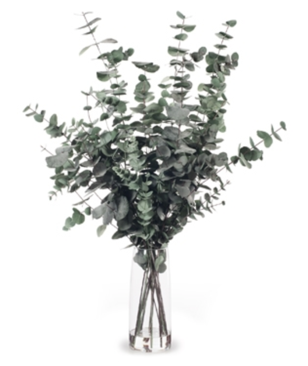 Eucalyptus Silver Dollar Mix in Vase Dark Green
