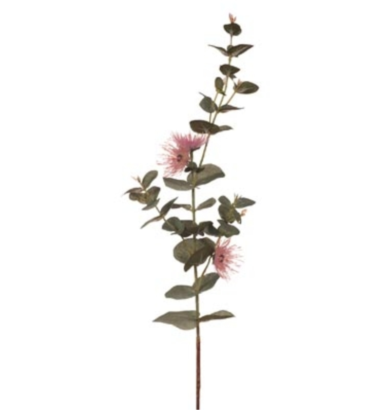 Eucalyptus Flowering Dollar Pink