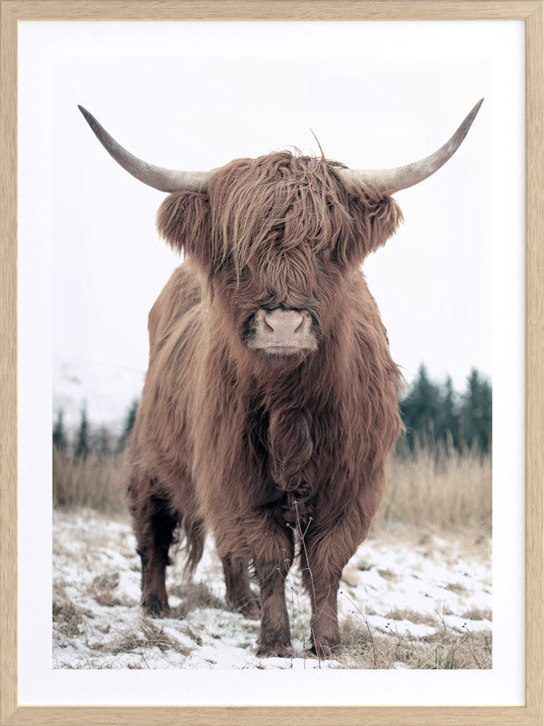 Highland - Framed Print