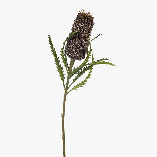 Coffee Banksia Pencil
