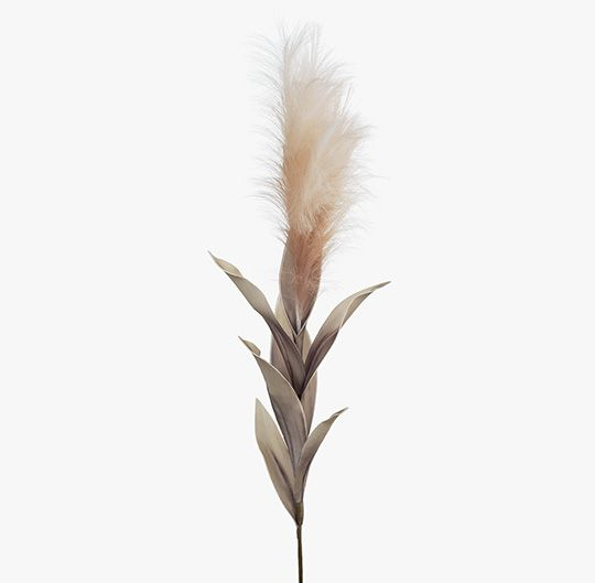 Blush Pampas Grass with Leaf