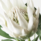 King White Protea Stem