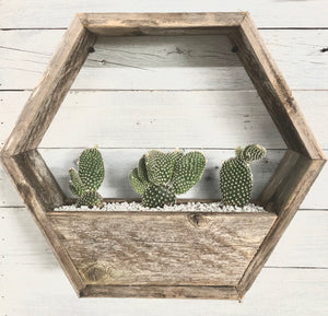Hexagon Shelf Wall Planter