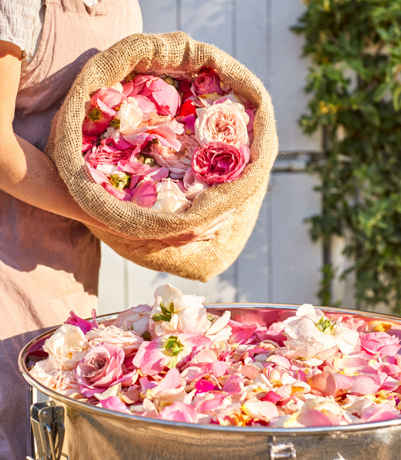 Our Journey to Handcrafted Rose Water