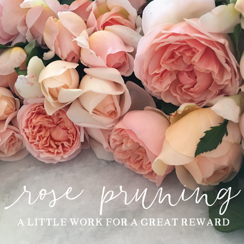 Rose Pruning: A Little Work for a Great Reward