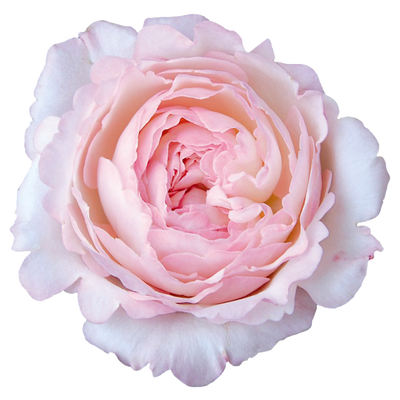 Garden of Grace Limited Edition Gift Set
