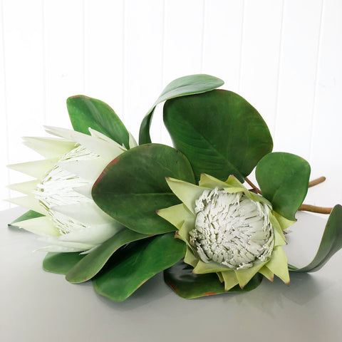 Protea King Stem - White