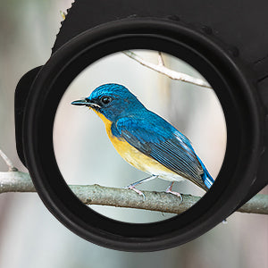 10x25 midrange binocular for bird watching