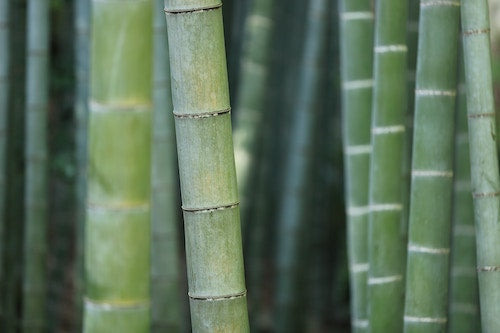 Naturally Sustainable Bamboo