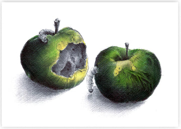 Kate Knight - Nature Morte, Rotten Apples
