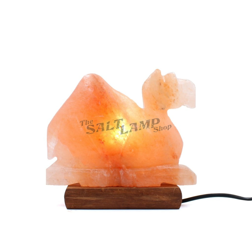 Camel Salt Lamp (Timber Base) Crafted
