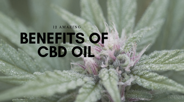12 Amazing Benefits of CBD Oil