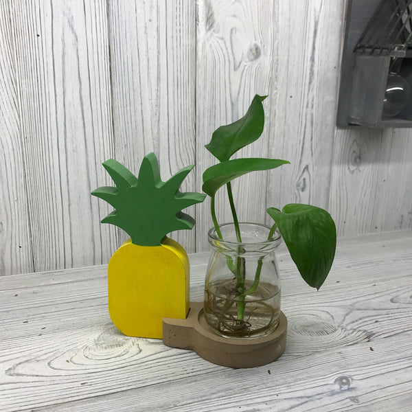 image of hydroponic home d cor pineapple pot