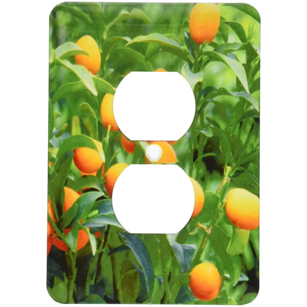 3dRose Kumquat fruit tree, Agriculture - NA01 PRI0002 - Prisma, 2 Plug Outlet Cover - Keuka Outlet