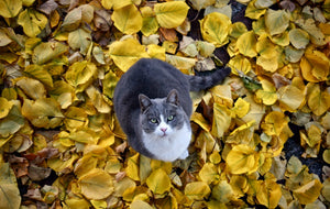 autumn pet instagram photos