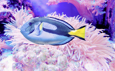 what does reef safe mean
