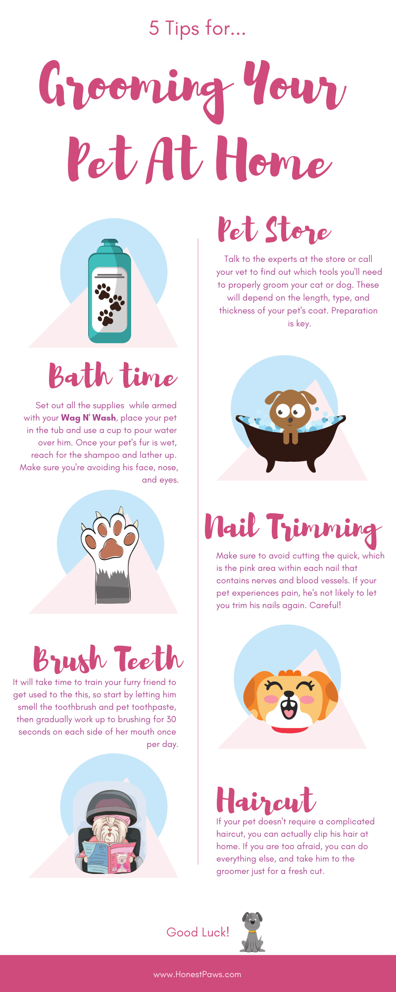 Grooming Your Pet At Home Honest Paws