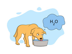 Meloxicam for Dogs causes increased thirst