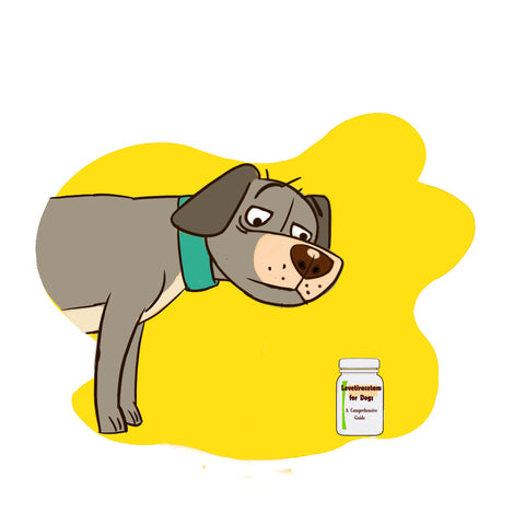 potassium bromide for dogs alternatives