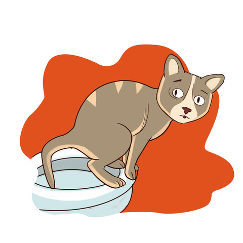 Cat Constipation: A Step-By-Step Guide | Honest Paws