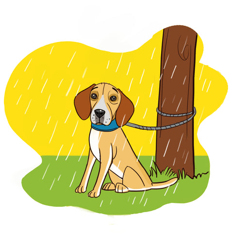 hurricane safety for dogs