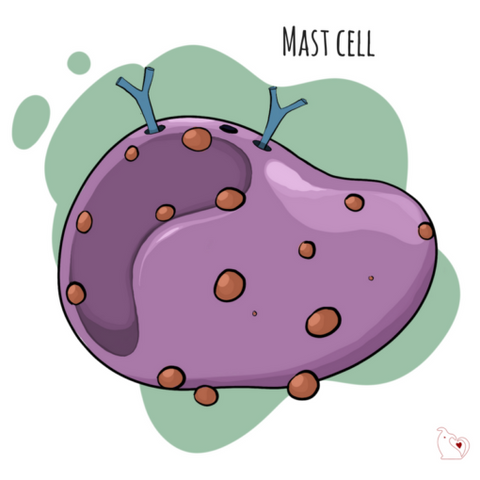 Mast Cell Tumor in Dogs: A Guide | Honest Paws